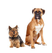 Two dogs of different breeds — Stock Photo