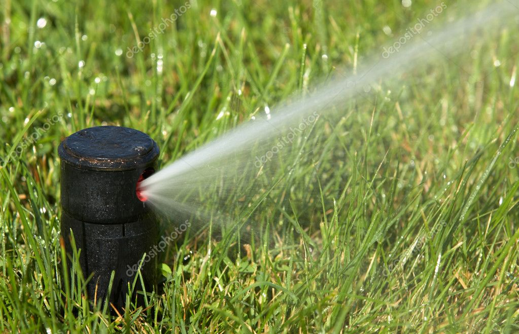 A field in summer is a sprinkler watering  Stock Photo #9440455