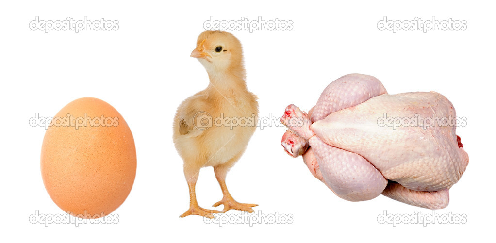 Industry chicken. First the egg, then chicken and finally the meat  Stock Photo #9440895