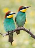Couple of birds — Stockfoto