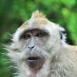 Paternal Look of Monkey - Stock Photo