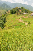 Rice Paddies and Terraces in Sapa — Foto Stock