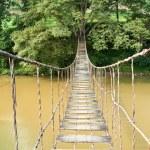 Hanging Bridge to the Tree — Stock Photo #10660199