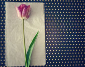 Tulip on polka dot background — Stock Photo