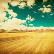 Stock Photo: Grunge image of desert road