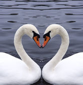 Swans heart — Stock Photo