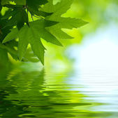 Green leaves reflecting in the water, shallow focus — Stockfoto