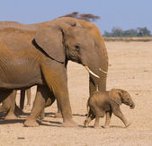 Elephant's family — Stock Photo