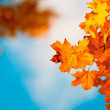 Autumn leaves, very shallow focus — Stock Photo #9332362
