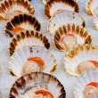 Fresh scallops at fish market — Stock Photo
