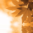 Autumn leaves reflecting in the water, shallow focus — Stock Photo