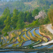Rice terraces of yuanyang,  yunnan, china - Stok fotoraf