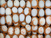 Chinese century eggs — Stock Photo