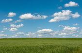 Groen veld met bloeiende bloemen en blauwe hemel — Stockfoto