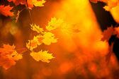 Folhas de outono, foco muito superficial — Foto Stock