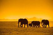 Silhouettes of elephants — Stock Photo