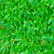 Green leaves background — Foto Stock