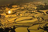 Pirinç terasları yuanyang, yunnan, Çin — Stok fotoğraf