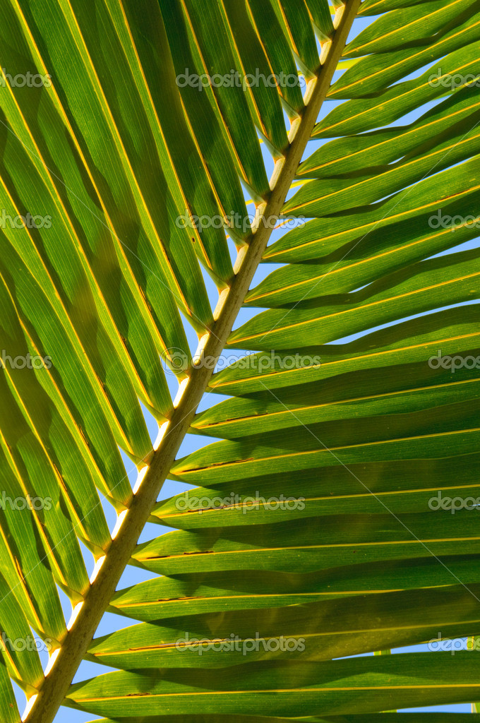 Leaf of coconut palm tree — Stock Photo #9364069