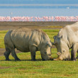 Rhinos in lake nakuru national park, kenya - Stock Photo