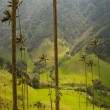 Royalty-Free Stock Photo: Vax palm trees of Cocora Valley, colombia