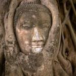 Buddha's head in banyan tree roots — Stock Photo