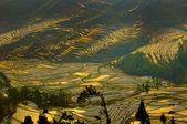 Rice terraces of yuanyang, yunnan, china — Stockfoto