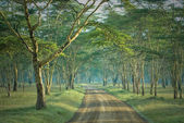 The road in mysterious forest — Stock Photo