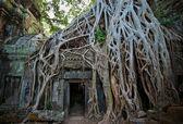 Ta Prohm Temple, Angkor, Cambodia — Fotografia Stock