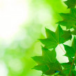 Green leaves, shallow focus — Stock Photo #9428376
