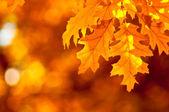 Sonbahar yaprakları, çok sığ odak — Stok fotoğraf