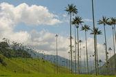 Vax пальмовые деревья долины cocora, колумбия — Стоковое фото