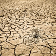 Cracked soil of desert - Stock Photo