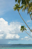 Background of sea, sky and palm trees — Stock Photo