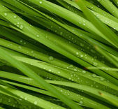 Droplets on grass - shallow focus — Stock Photo