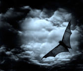 Bat flying in the dark cloudy sky — Stock Photo