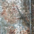 Grunge background of old wall and branches — Stock Photo