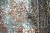 Grunge hintergrund der alten mauer und filialen — Stockfoto