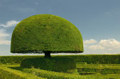 Mushroom shaped tree — Stock Photo
