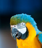 Close up image of parrot — Stock Photo