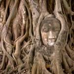 Buddha's head in banyan tree roots — Stock Photo #9504464