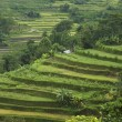 Rice terraces, bali — Stock Photo