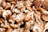 Mushrooms in the market — Stockfoto