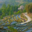 Rice terraces of yuanyang,  yunnan, china - Stock Photo