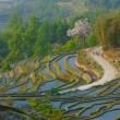 Rice terraces of yuanyang, yunnan, china — Stock Photo #9525575