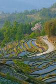 Rice terraces of yuanyang, yunnan, china — Stock Photo