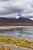 フラミンゴ、ボリビアで湖に映る山 — ストック写真