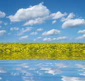 Dandelion field reflecting in the water — Stockfoto