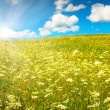 Green field with blooming flowers and blue sky — Foto Stock