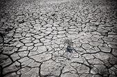 Cracked soil of desert — Stock Photo